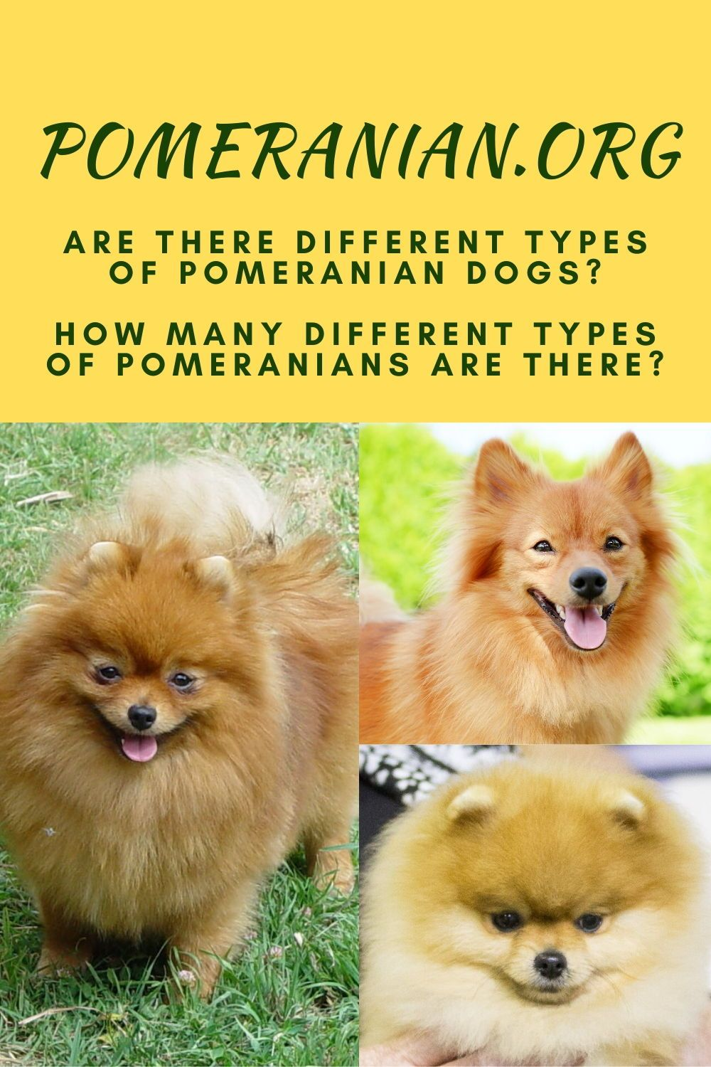 Are There Different Types Of Pomeranian Dogs In 2020 Pomeranian Dog Pomeranian Facts Working Dogs Breeds