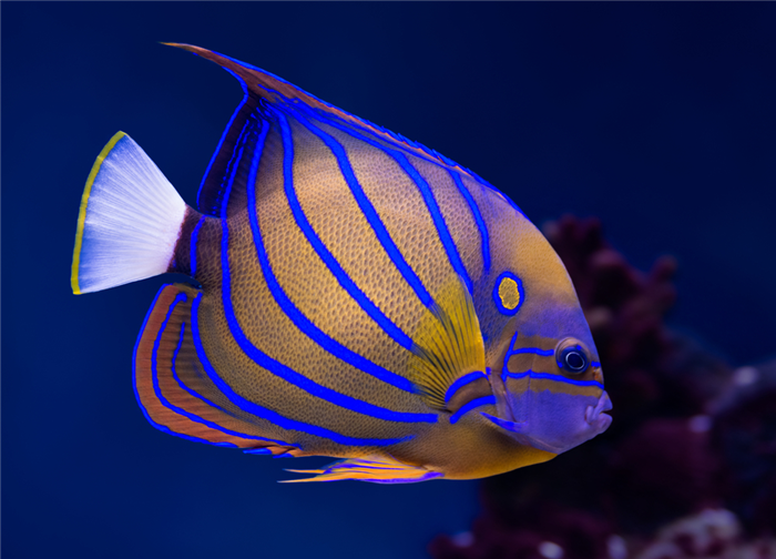 http://zangaru.com/4/7/95/your_life/pets_animals/top_10_tropical_fish