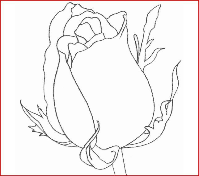My Nature Book Roses Drawing Flower Drawing Flower Painting
