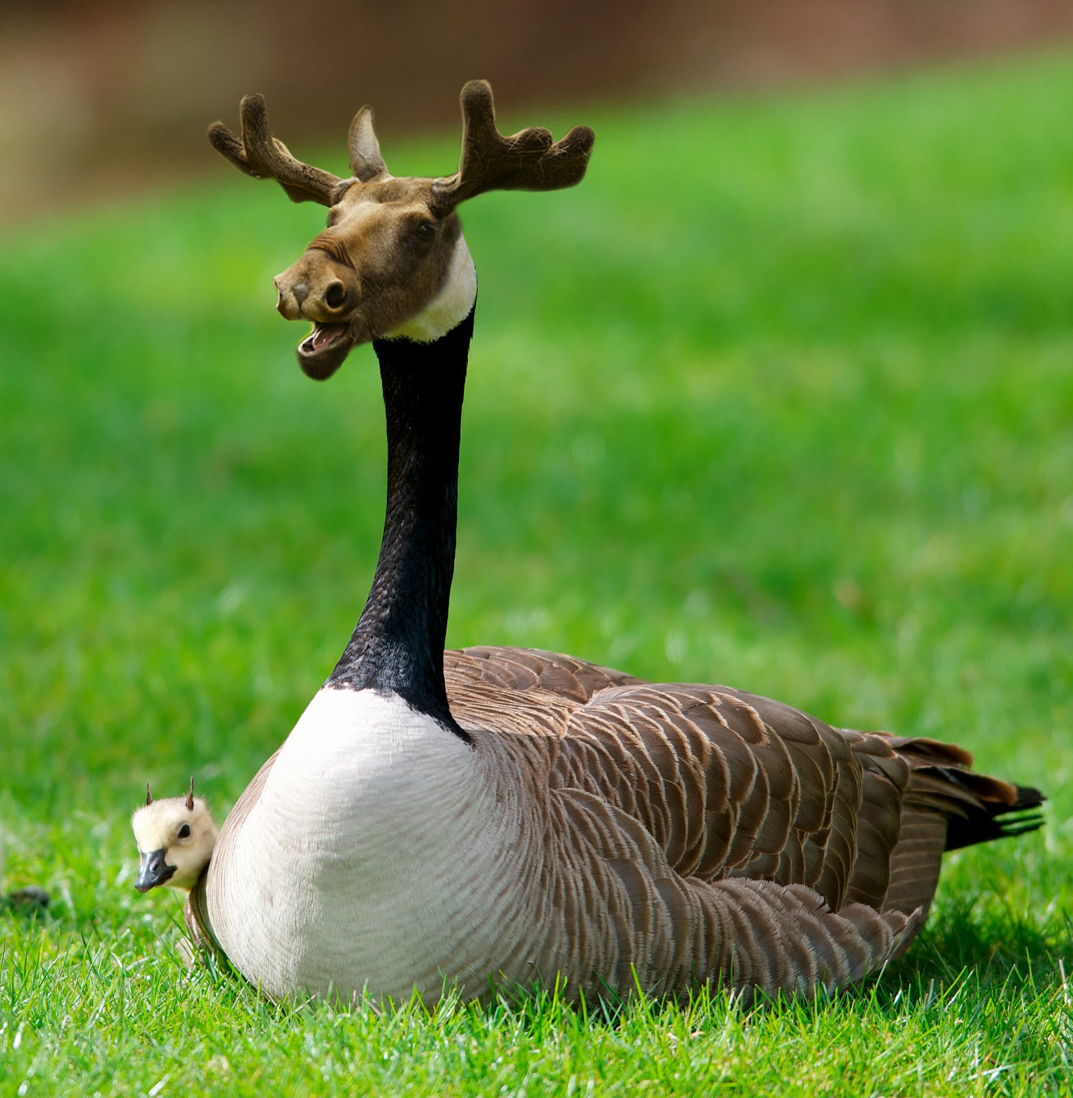 The Moosegoose X Post R Dontstarve Photoshopped Animals Animal Mashups Fake Animals