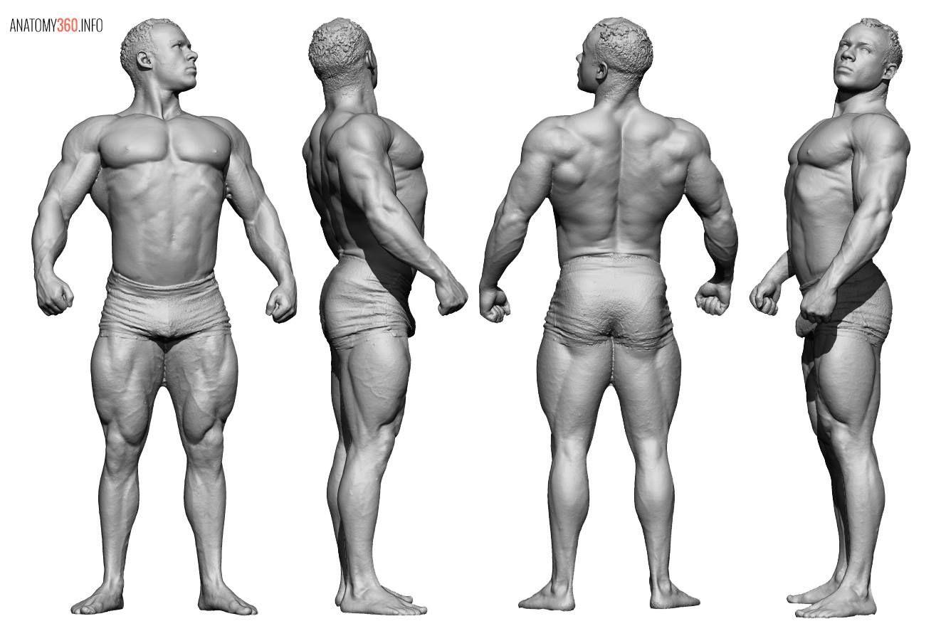 Pin von Damián Bonani auf Art | 3D Model Anatomy360.info | Pinterest