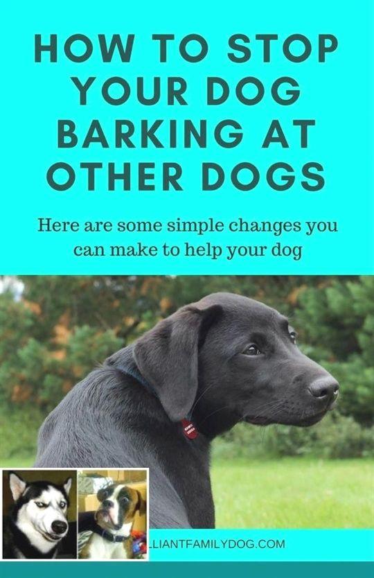 Dog Training Treat Bag Dog Training 10 Weeks Old Dog Training