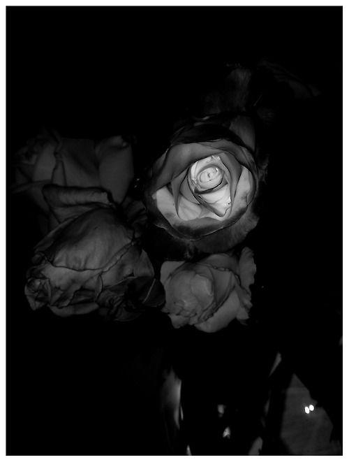 Roses. S)