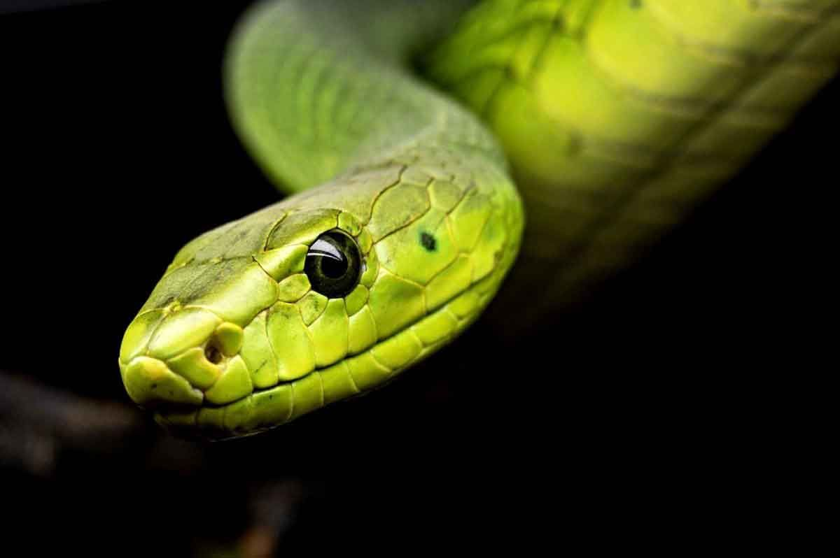 Ruyada 4 Yilan Gormek Beautiful Snakes Snake Reptiles