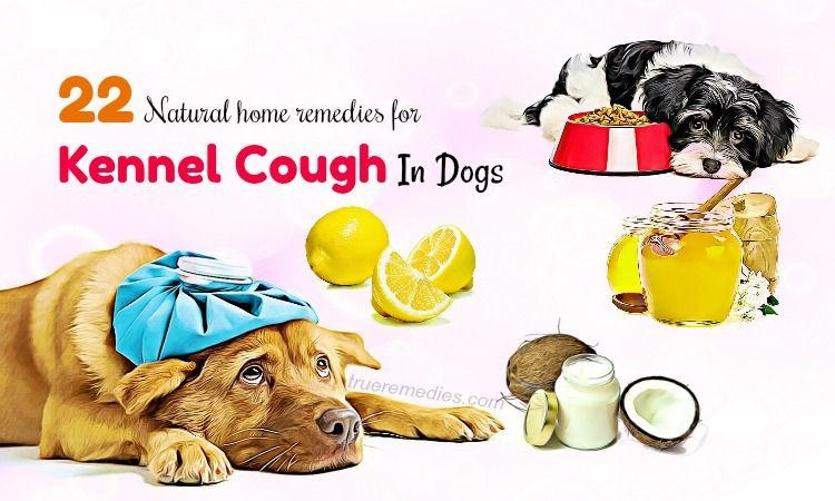 Image Result For Natural Remedies For Kennel Cough Dog Coughing Dog Cough Remedies Natural Home Remedies