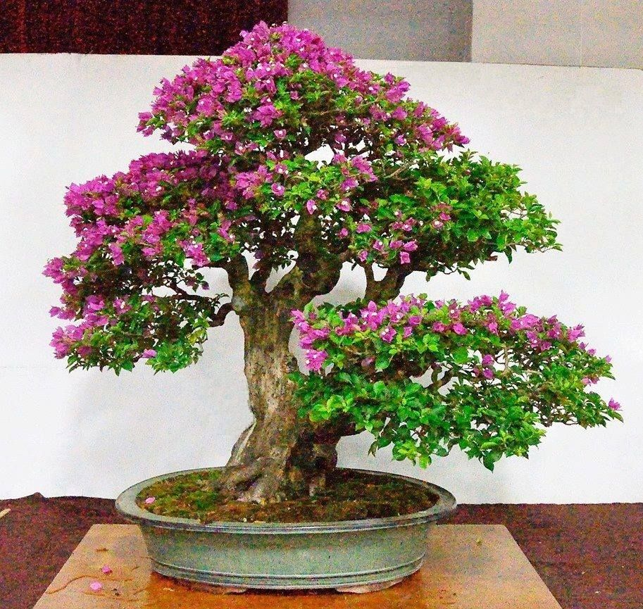 Pin On Flowering Bonsai