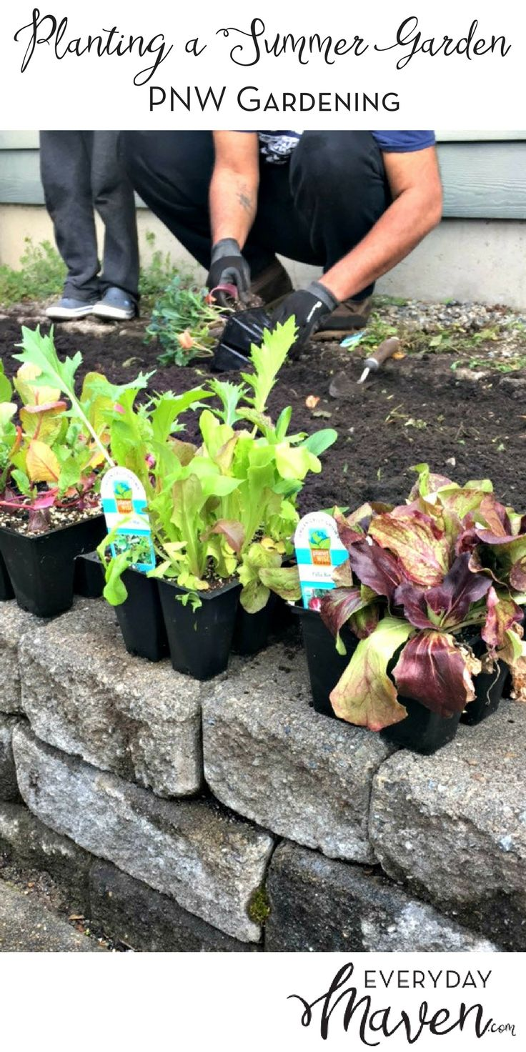 Tips For Planting An Organic PNW Vegetable Garden. Done In Partnership With Fred  Meyer Garden Center. Via @EverydayMaven Images