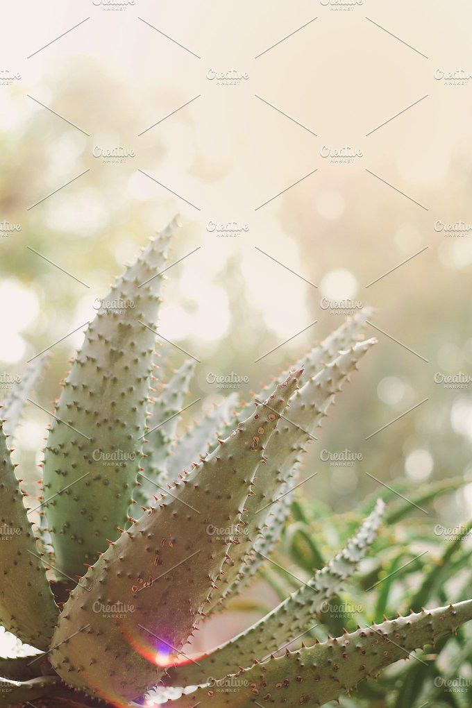 Aloe at Sunset by Rene Jordaan Photography on @creativemarket