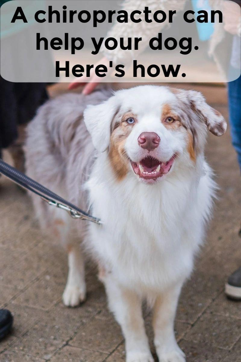Pin On Dog Blogs