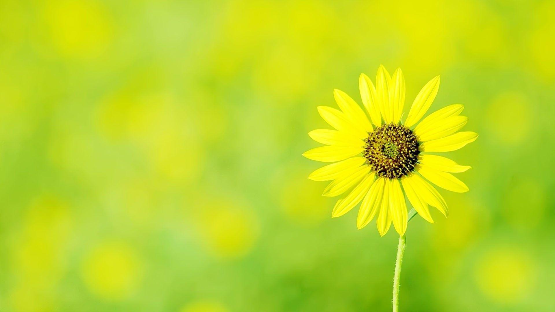 Gorgeous Sunflower Wallpaper