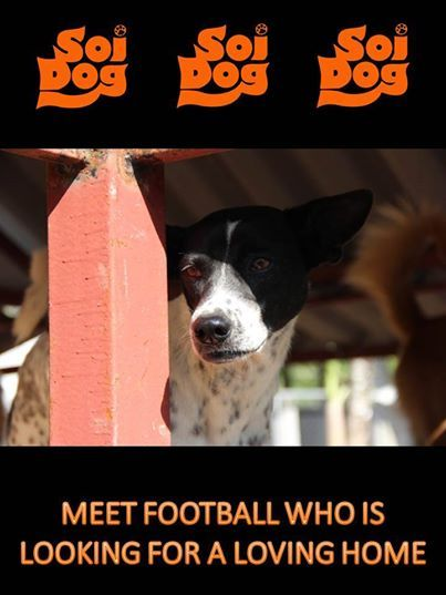 """""""Football"""" is the sweetest little girl who amazingly has now been with us for 4 long years! https://www.facebook.com/photo.php?fbid=654213687953703&set=a.137025779672499.11141.108625789179165&type=1&theater"""