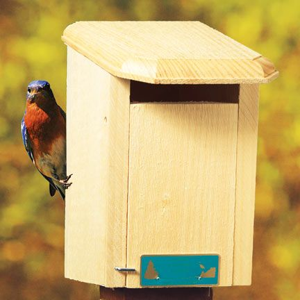 Sparrow-Resistant House w/Free Book