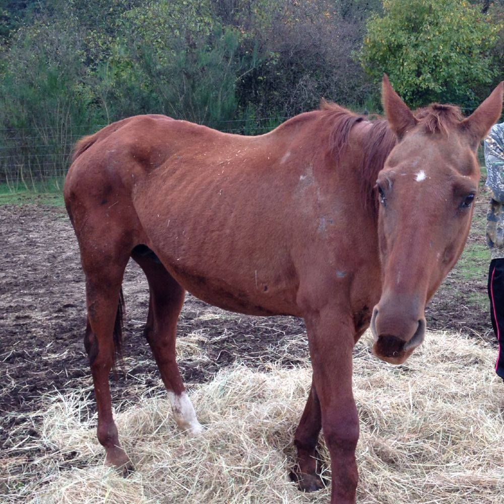 Mares foals coming off feedlot by pregnant mare rescue