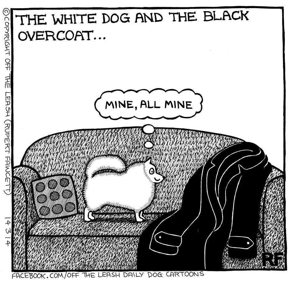 The white dog and the black coat... I miss you, my furry white angel! My black clothes are not the same without you.