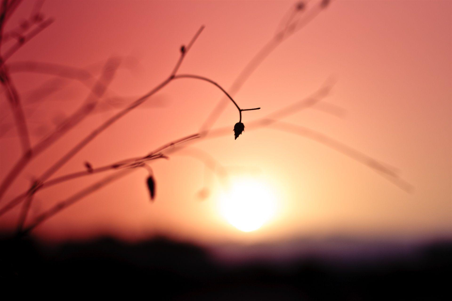#torkade blommor, #avstånd, #växt, #solnedgång, #närbild, #färg, #blad, #gren, #sol, #oskärpa, #himmel