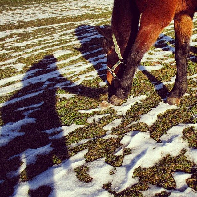 #horse #horses #riding #passion #me #you #follow #food #snow #garden #grass #green #shadow #love #illusion #magic #nature #instanature #feeling #soul #tenderness #good #novellaorchidea #novella #orchidea #raccontierotici #racconti #ebook