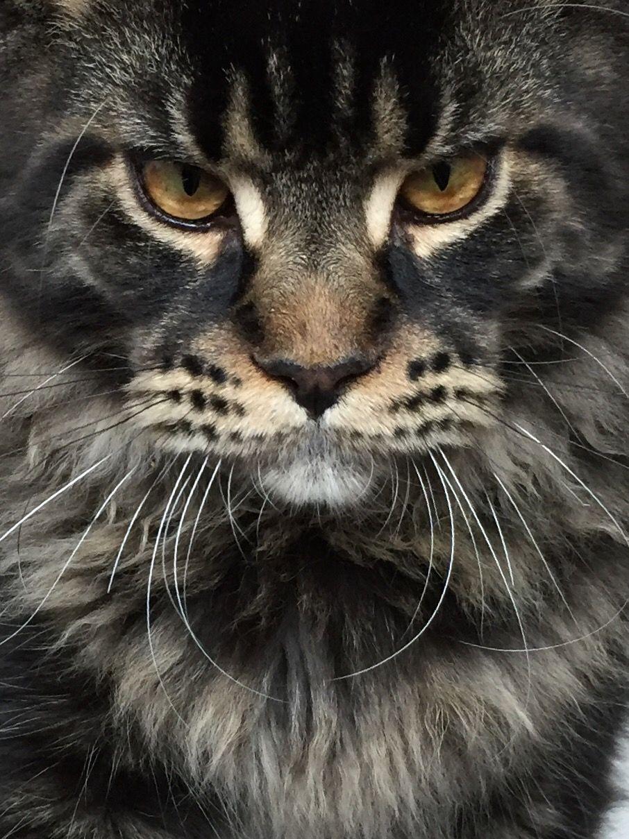 cursed cat image