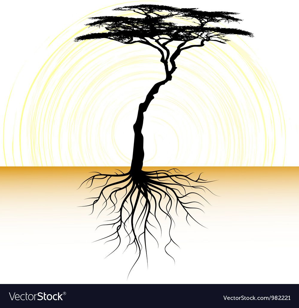 Acacia Tree With A Root Royalty Free Vector Image Ad Root Tree Acacia Royalty Ad In 2020 Vector Trees Acacia Tree Abstract Flowers