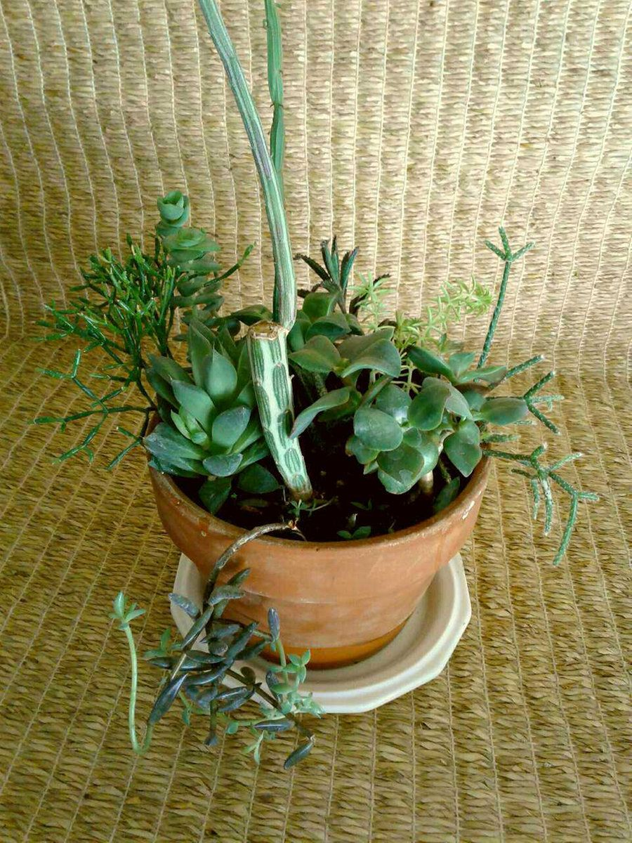 Succulent Garden In A Terracotta Planter For From One Person Online Plant Nursery Phoenix Az Local Meetup By Ointment Or Delivery May Be
