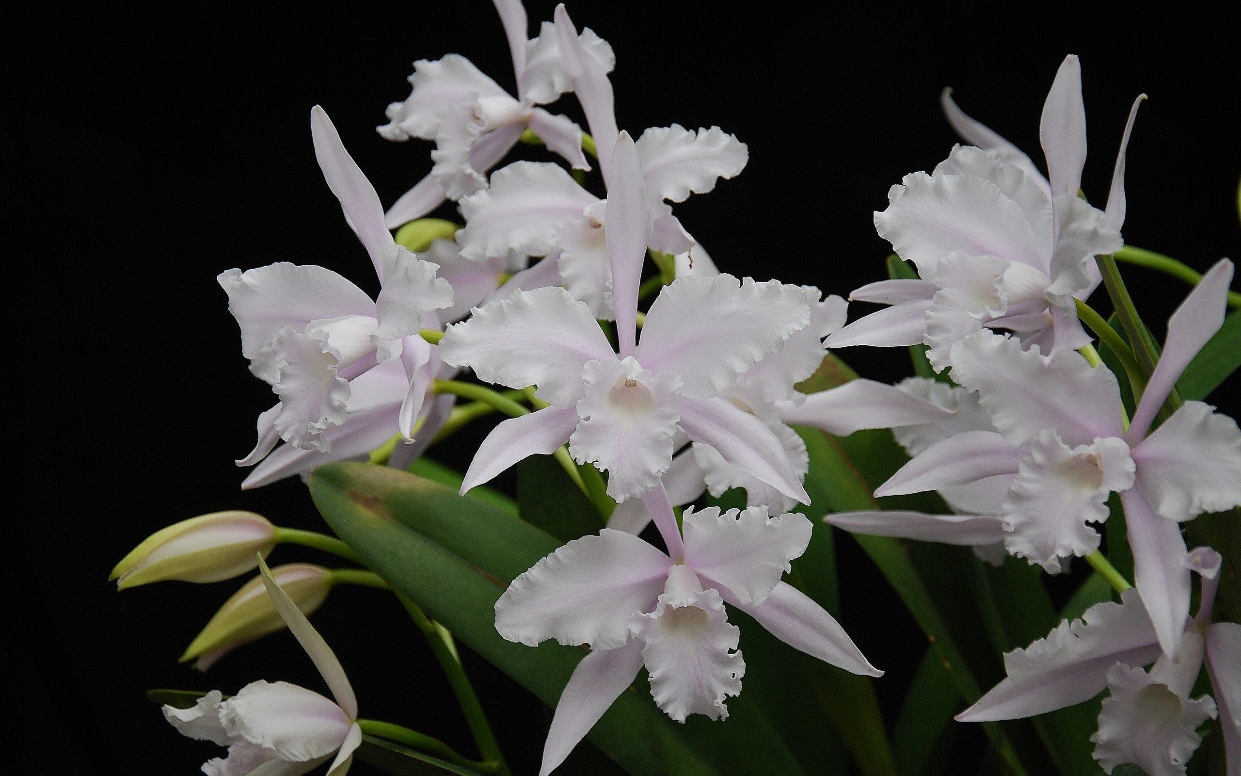 Backgrounds in high quality orchid backround esben nashwilliams