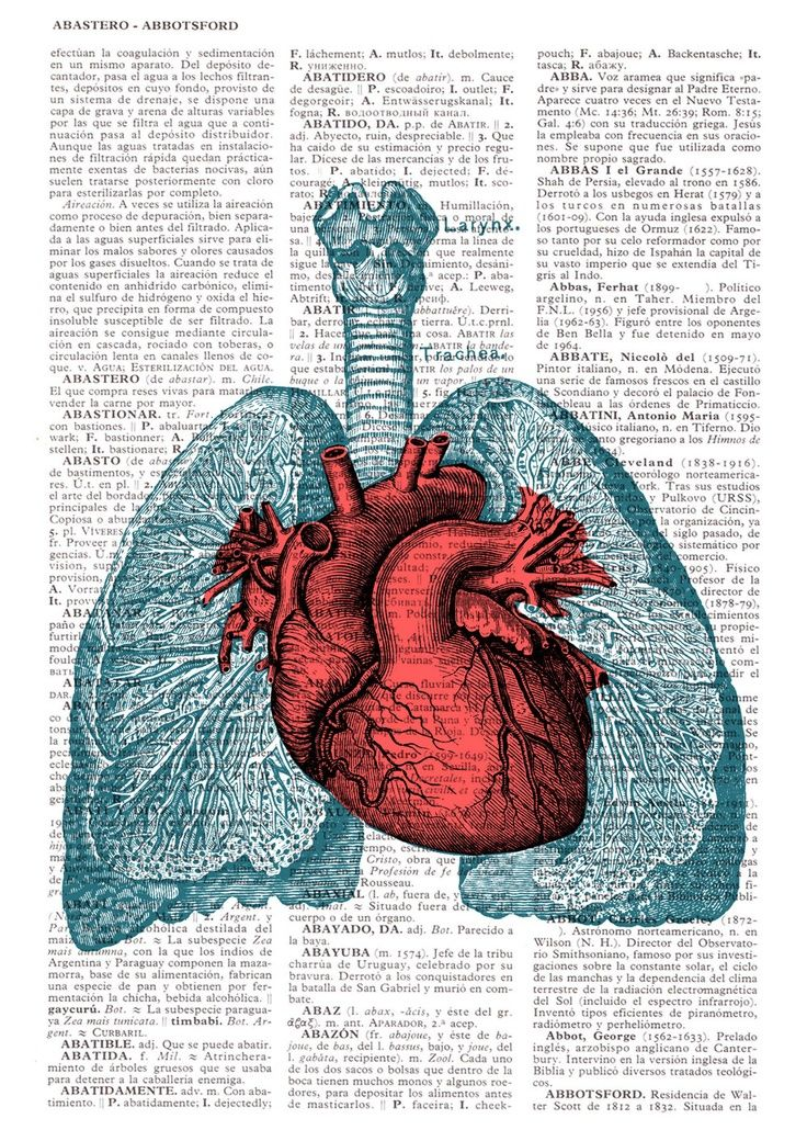 Heart and Lungs Anatomy book page Print on Vintage Encyclopedic page ...