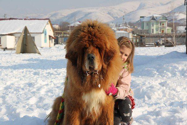 Leones de la nieve: Tíbet en Kazajstán