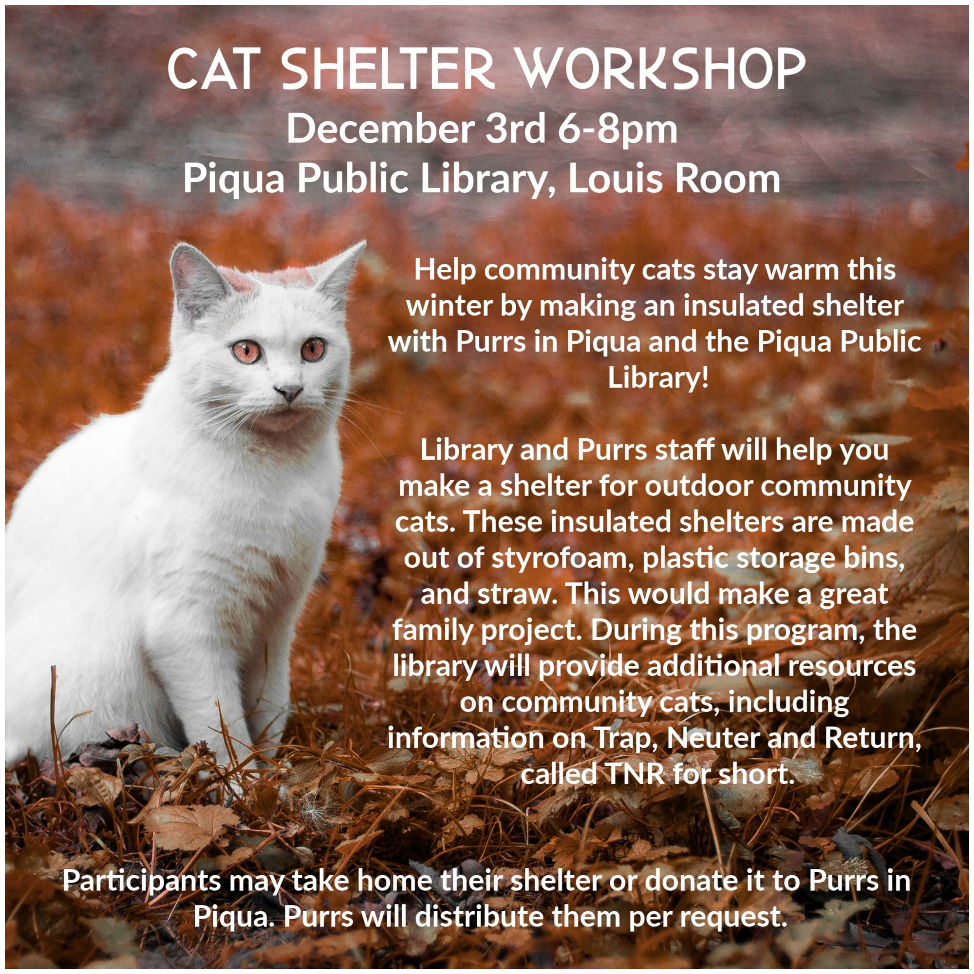 Help community cats stay warm this winter by making an