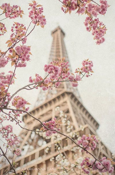 Paris Photography Eiffel Tower With Cherry Blossoms Papier