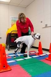 Pt For Pets Vets Prescribing Physical Therapy Dog Physical Therapy Pet Vet Dog Conditioner
