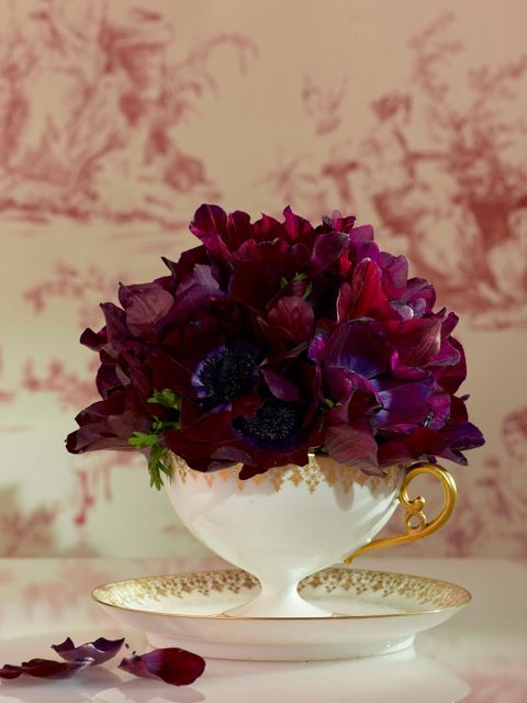 Anemone Little French Merlot Cottage Pinterest Fleurs
