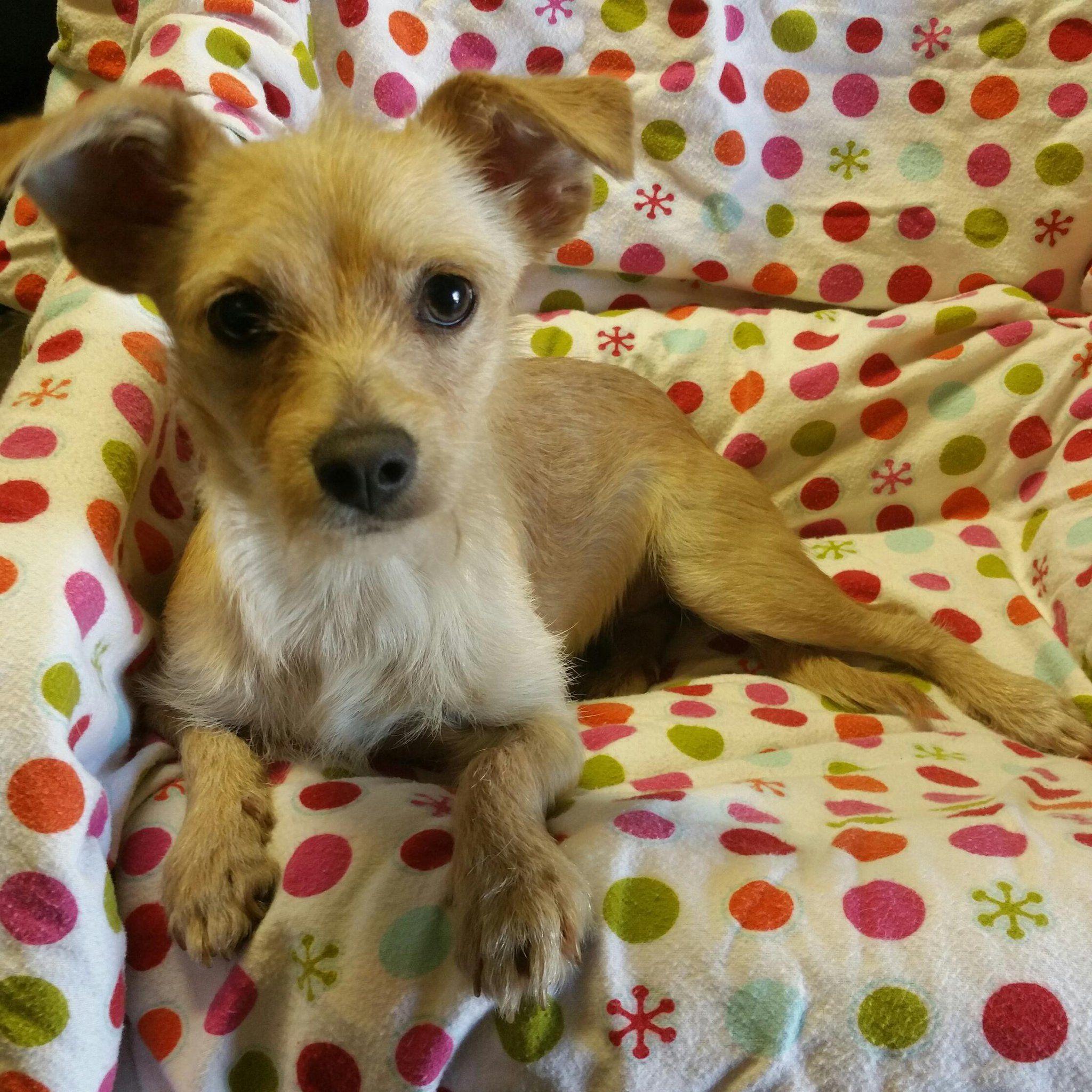 Gayweho Dogs 4 U On Pets Pet Adoption Dogs