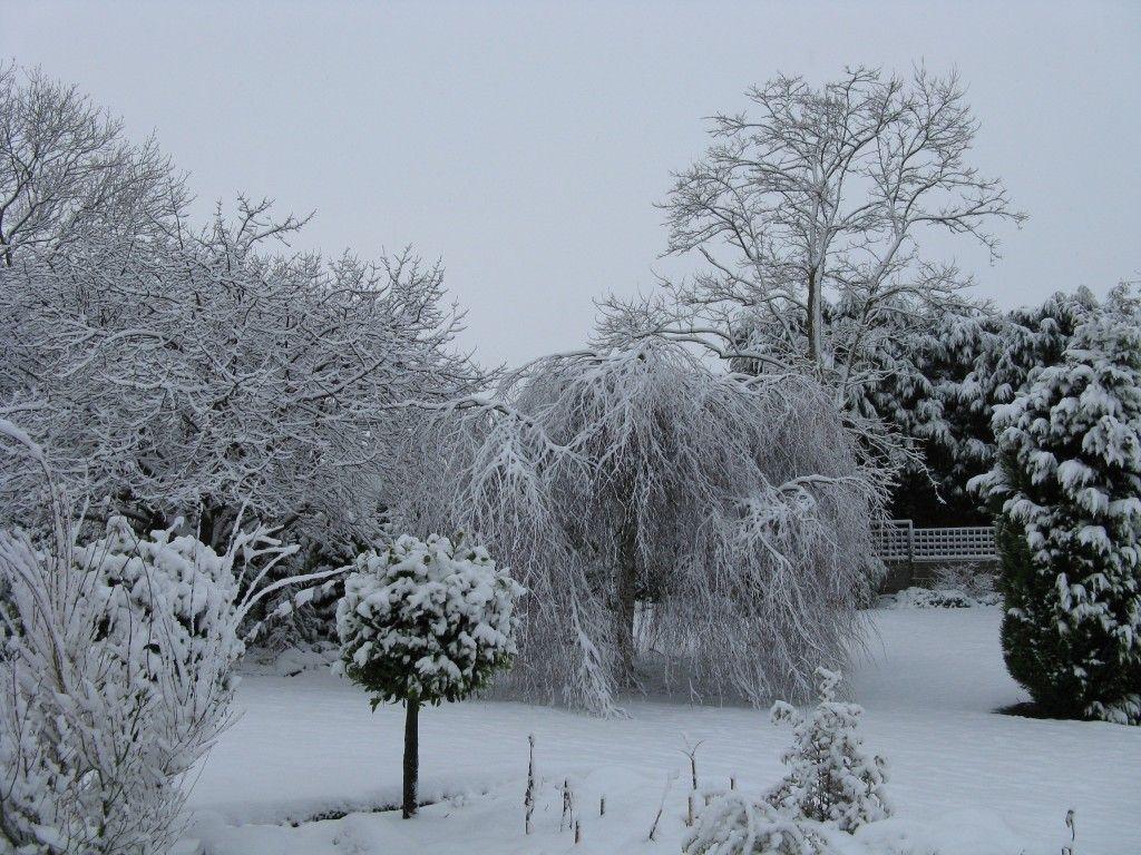 the garden in winter showing the stark outlines winter gardens