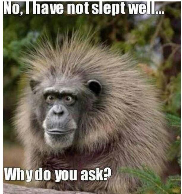 This is what I look like some days.  :/