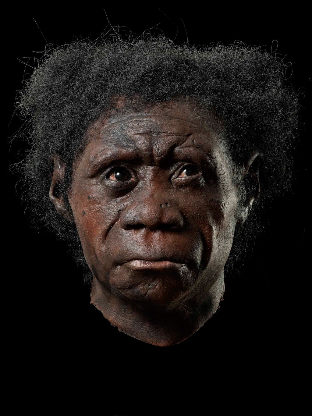 Reconstructions Of Our Ancestors Made By Adrie And Alfons