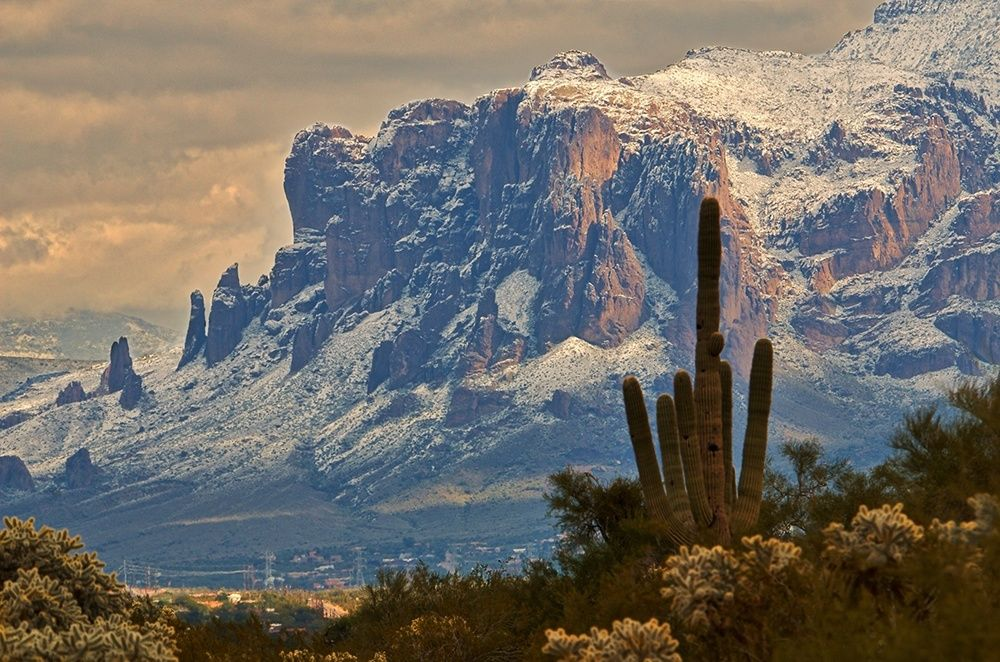 The snow-covered Superstition Mountains loom over a mature