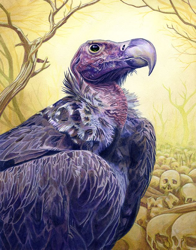 Abutre Personagens Em 2019 Abutre Aves E Personagens