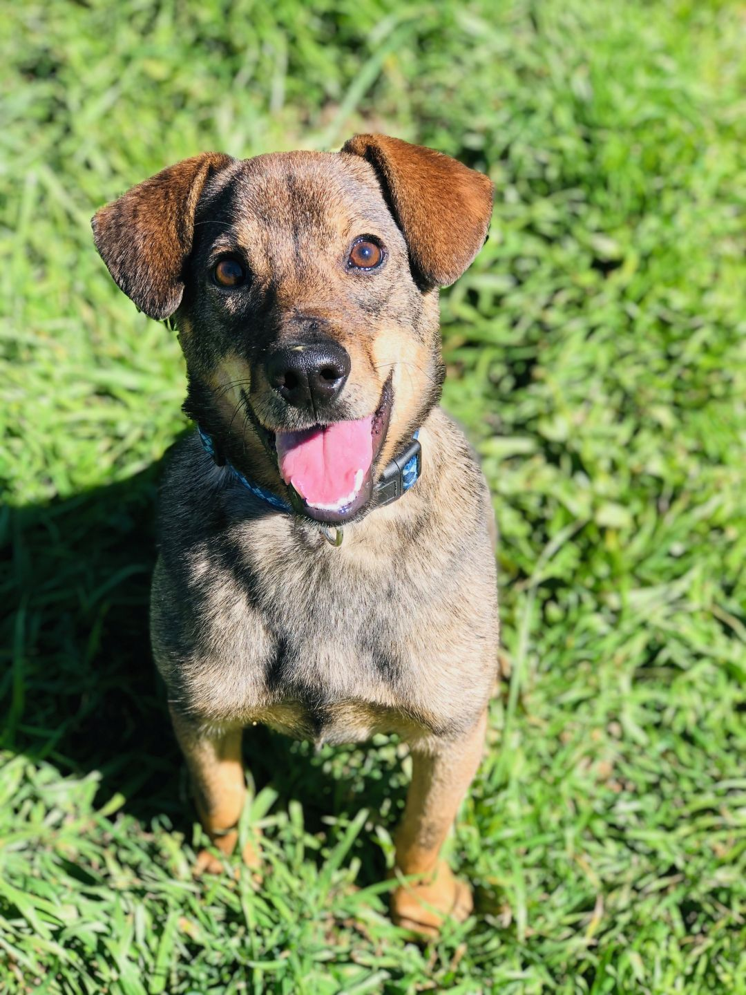 Adopt Trevor on Dogs up for adoption, Animal rescue, Pet