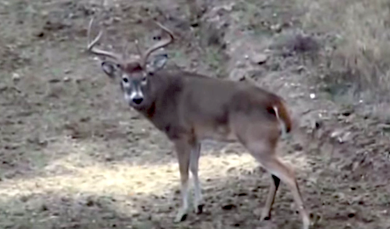 Watch video of a big buck hit the ground while Bill Busbice is