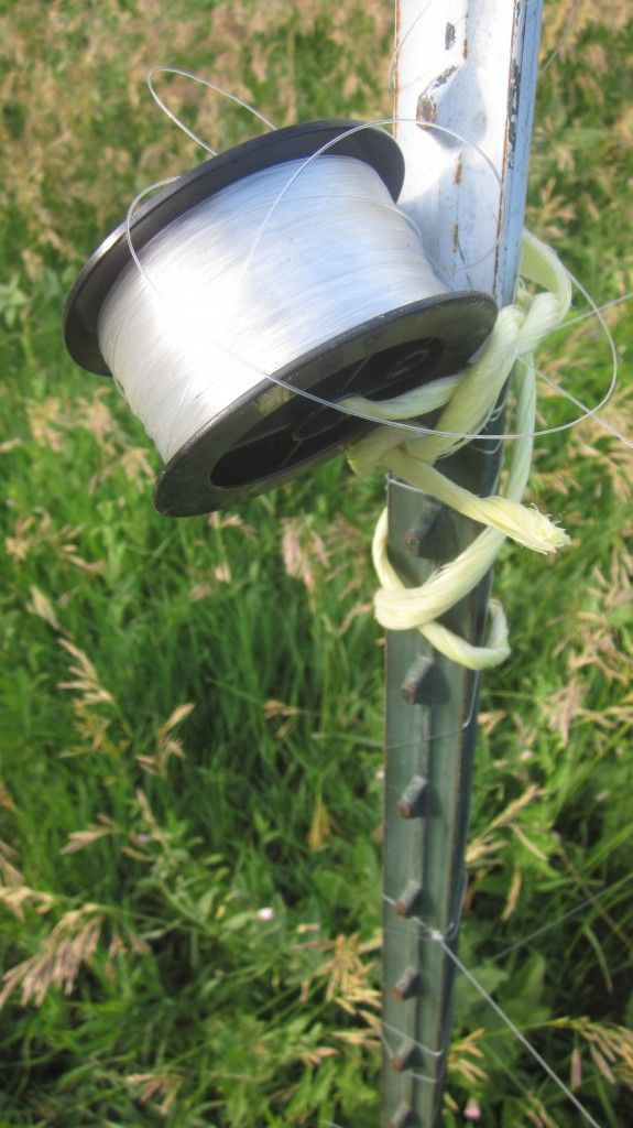 I keep my extra fishing line where i can grab it easily How to keep deer out of garden fishing line