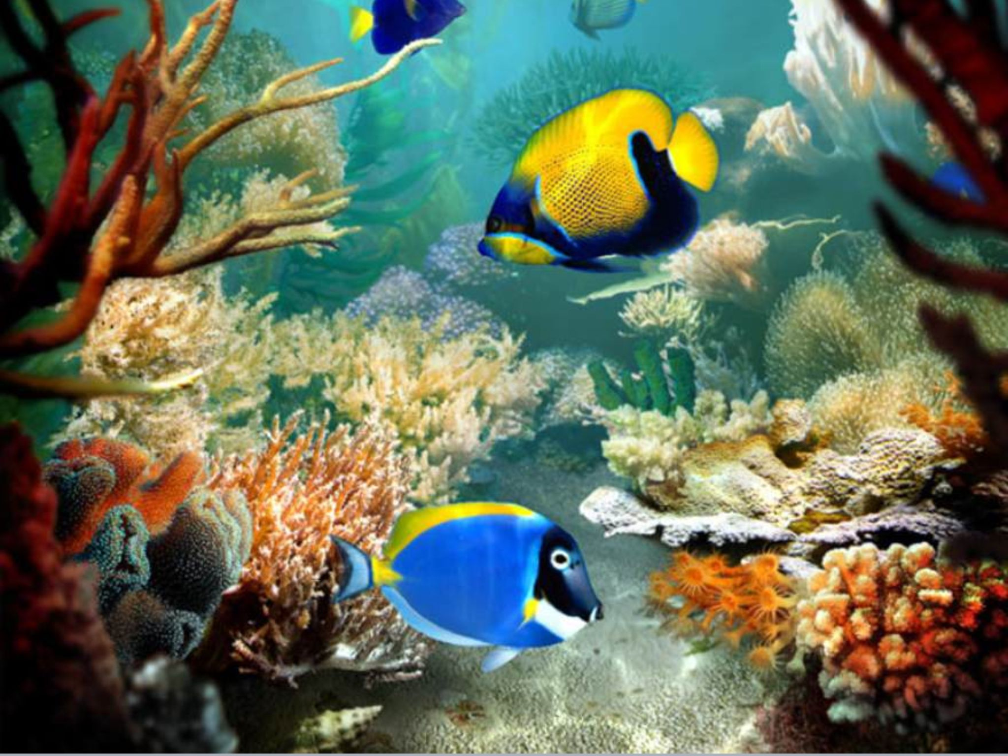 Beautiful fishes | Sea life | Pinterest | Beautiful fish