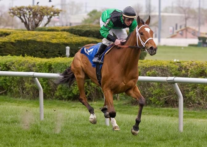 The Pizza Man (USA) 2009 B.g. (English Channel (USA)-I Can Fan Fan (USA) by Lear Fan (USA) 1st Stars and Stripes S (USA-G3,12fT,Arlington)