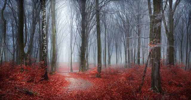 Fantasy Forest Red Trees Leaves Woods Wall Art Canvas Pictures