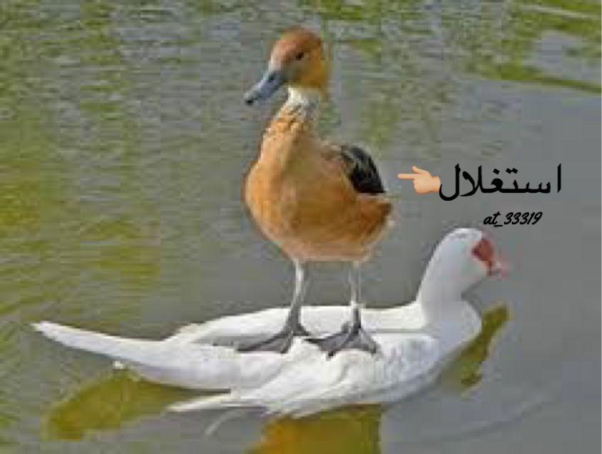 مضحك فديو صور متحركة ذوق بنات اولاد مضحكة ههههه Funny Animal Jokes Funny Animals Funny Birds