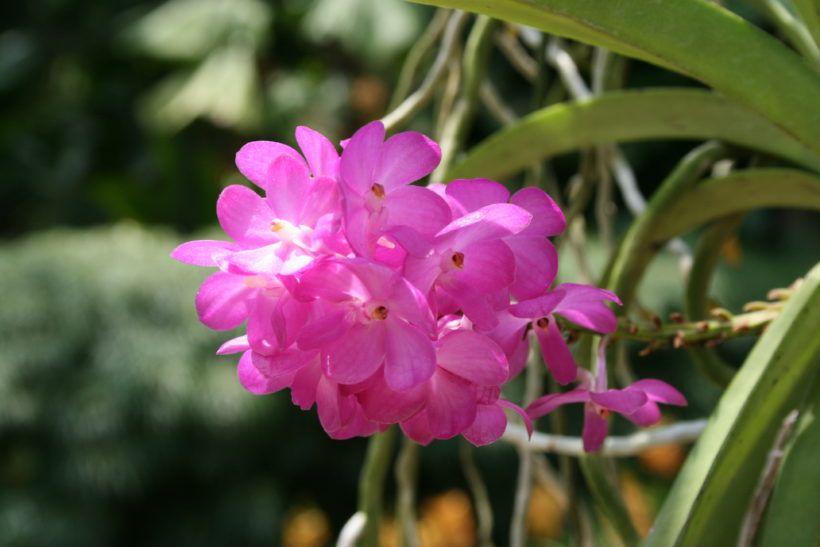 Comment Soigner Une Orchidee Comment Entretenir Une Orchidee