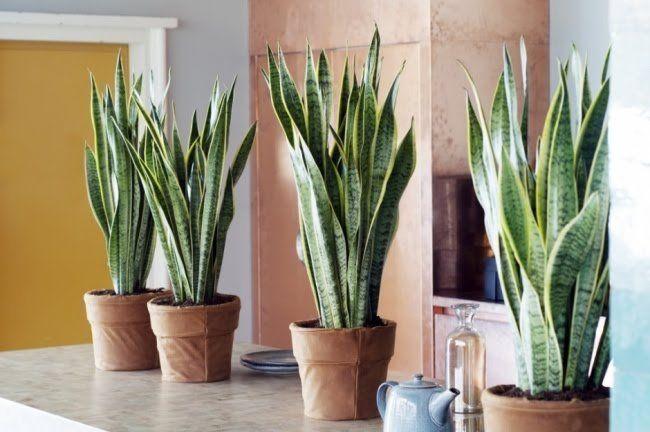10 Plantes Pour Creer Le Microclimat Ideal Chez Soi Plante