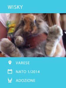 Wisky ha un anno ed è molto coccolone. Chi adotta questi piedoni? #adozione #conigli