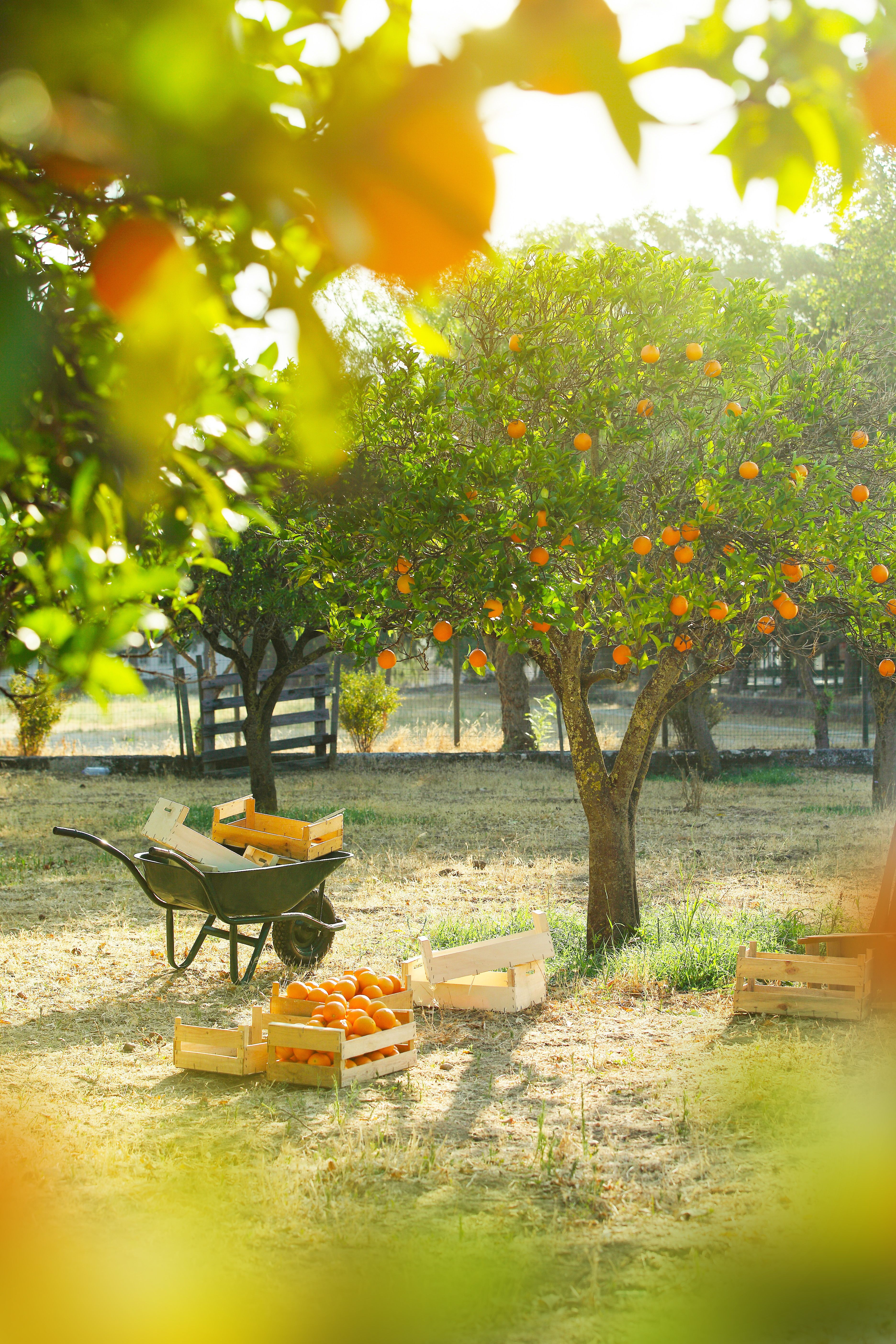 Growing Fruit Trees In New England Fruit Trees Fruit Bearing Trees Citrus Trees