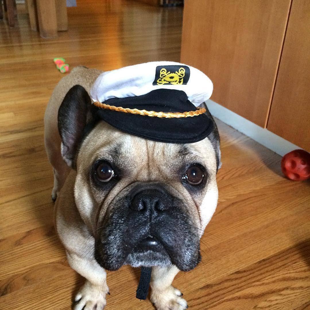 Do I Have Something In My Teeth Bulldog Puppies French Bulldog