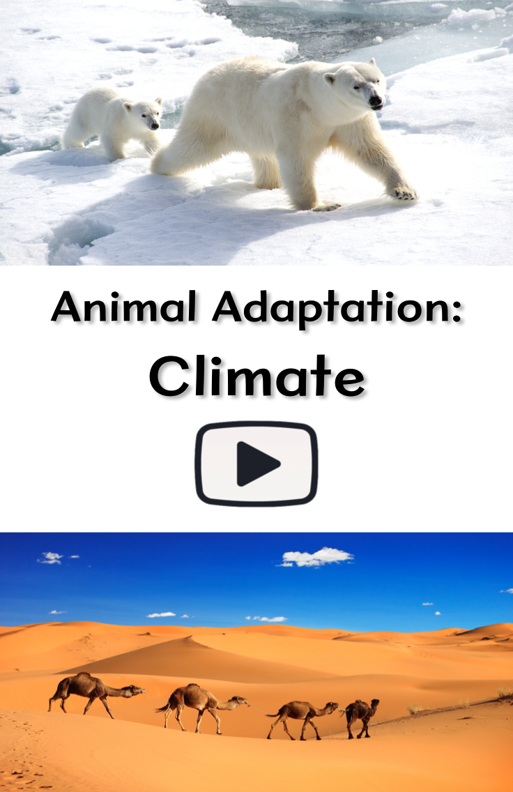 Animal Adaptation Climate Pinterest Desert Lizards Animal