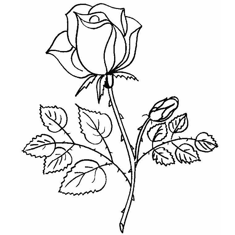Malvorlage Rose Einfach - Vorlagen zum Ausmalen gratis